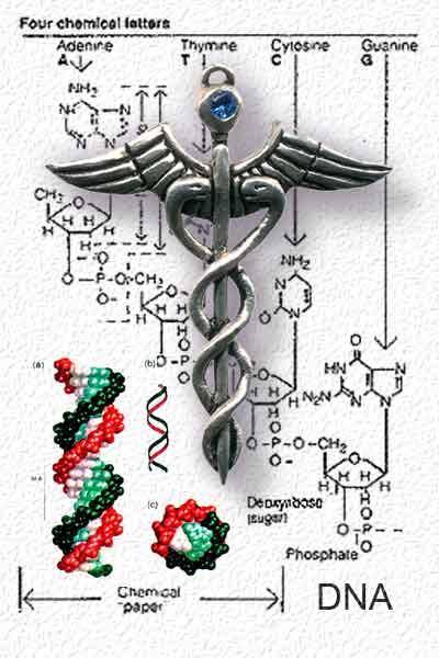 DNA Caduceus
